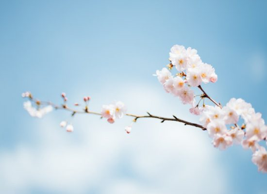 A spring tree bloom