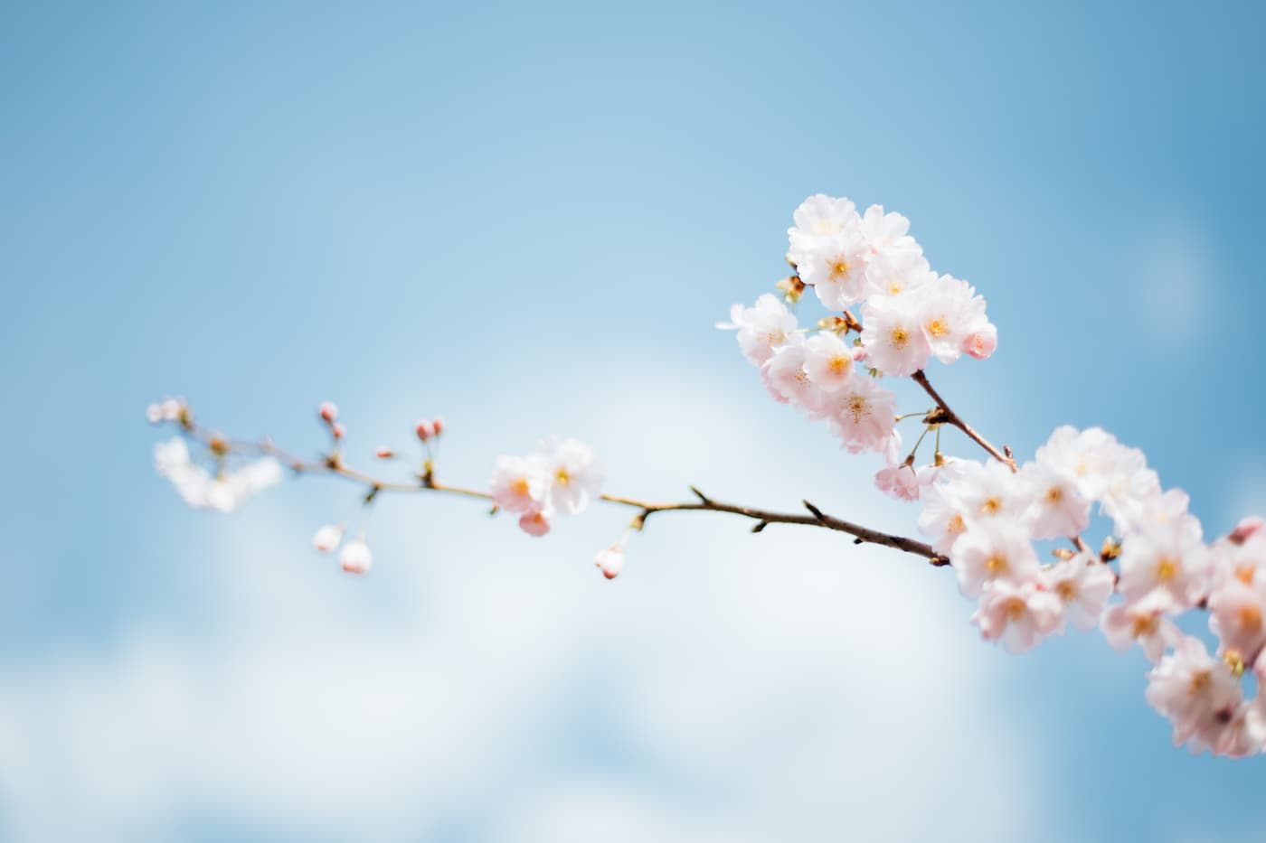 A spring bloom