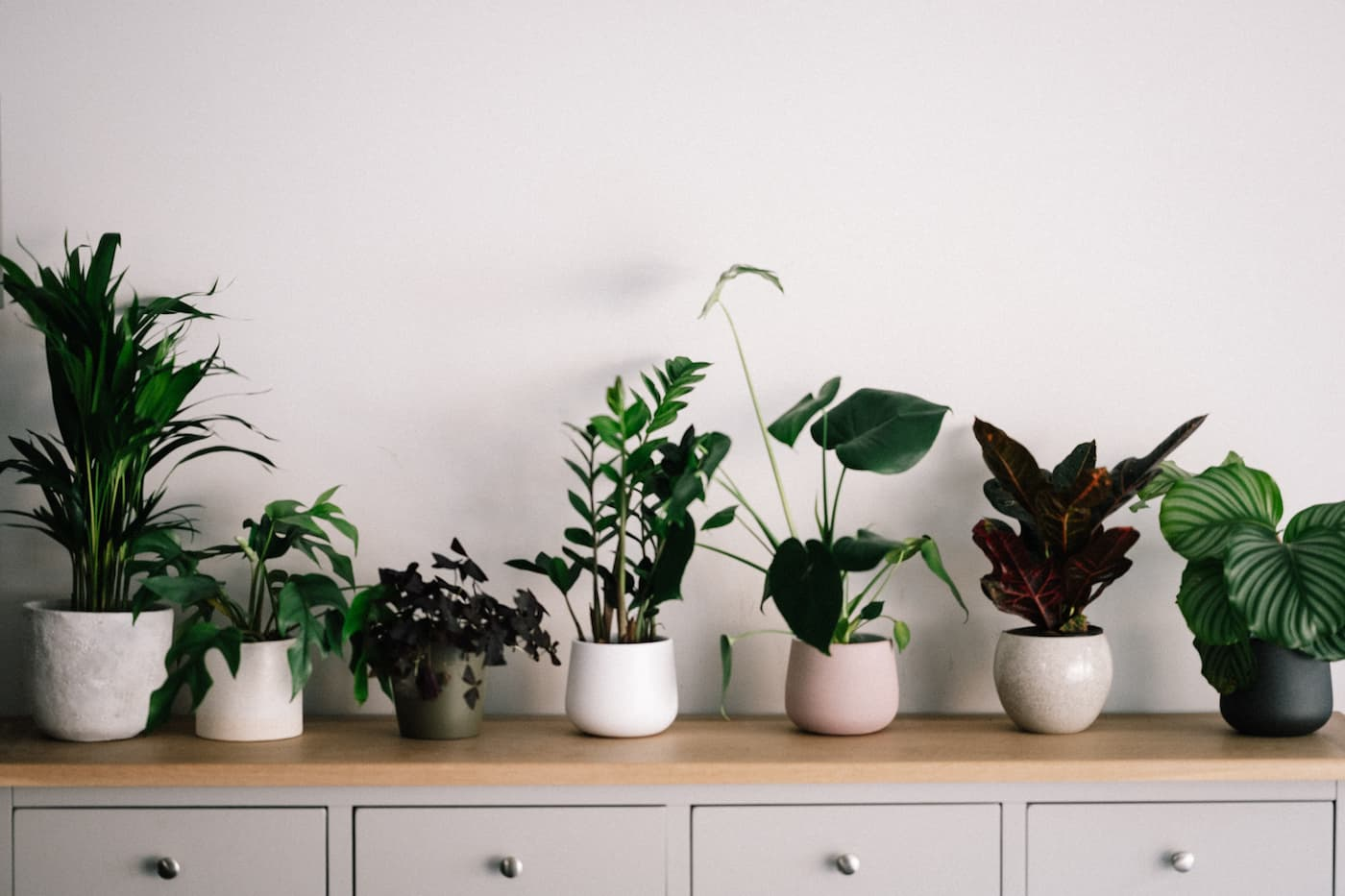 a row of indoor houseplants sitting on a countertop